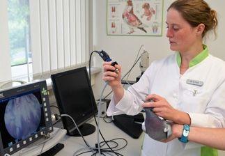 Dr-Peus-beim-Endoskopieren-einer-Brieftaube