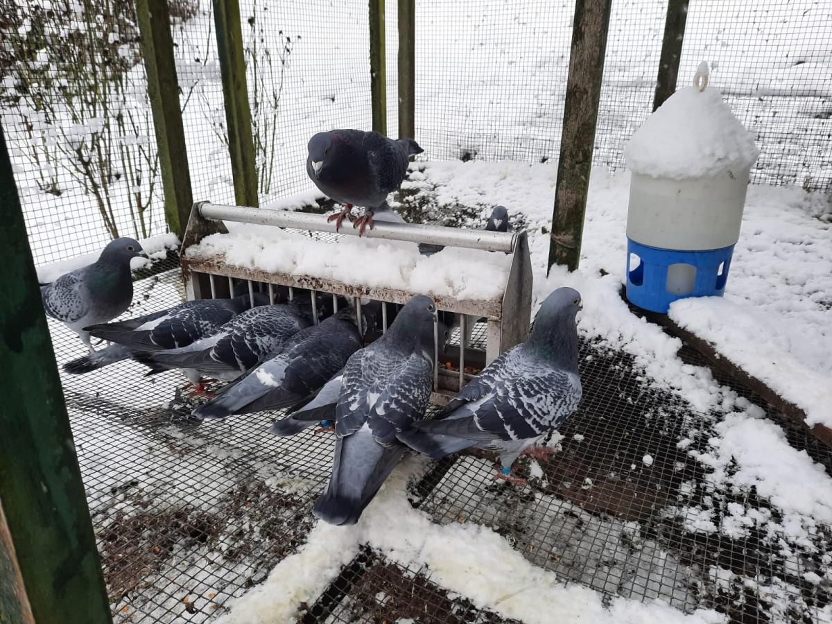 Wintereinbruch-auch-im-Taubenschlag-bei-Rolf