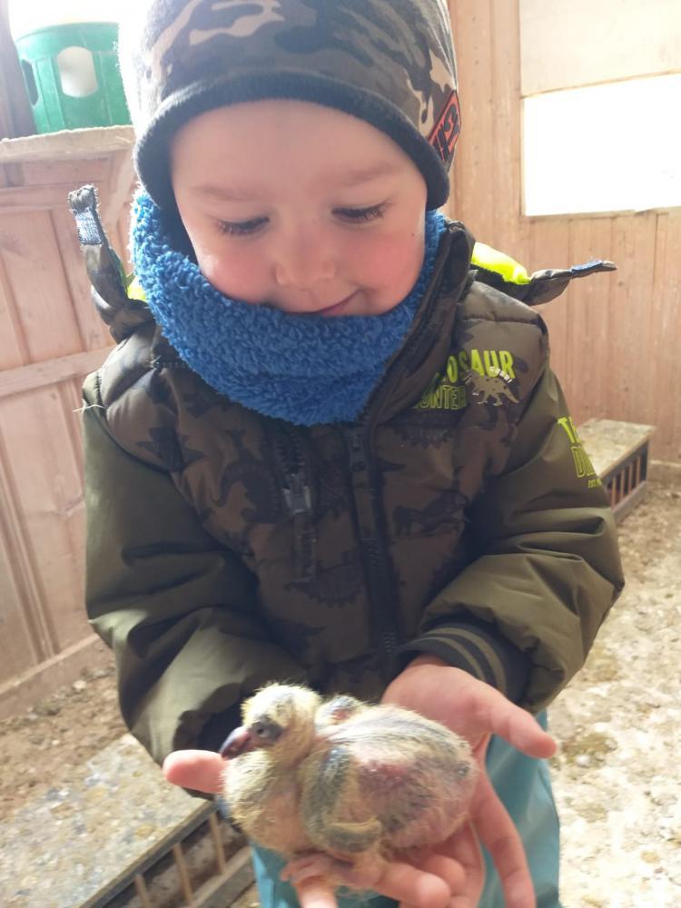 Lukas-Janker-ist-mit-3-Jahren-auch-schon-begeistert-von-Brieftauben-und-Mitglied-im-Brieftaubenverband-Danke-an-Matthias-Janker